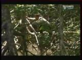 Man vs Wild-Le Costa Rica Forêt tropicale