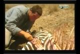 Man vs Wild-Le Kenya (savane africaine)