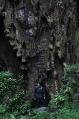 Running Wild-Ben Stiller